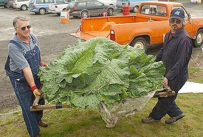 http://www.dcfud.com/wp-content/uploads/2010/08/giant-cabbage_49.jpg